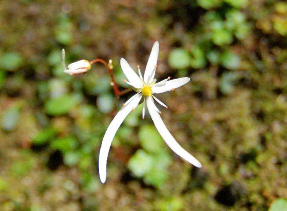 屋久島の花