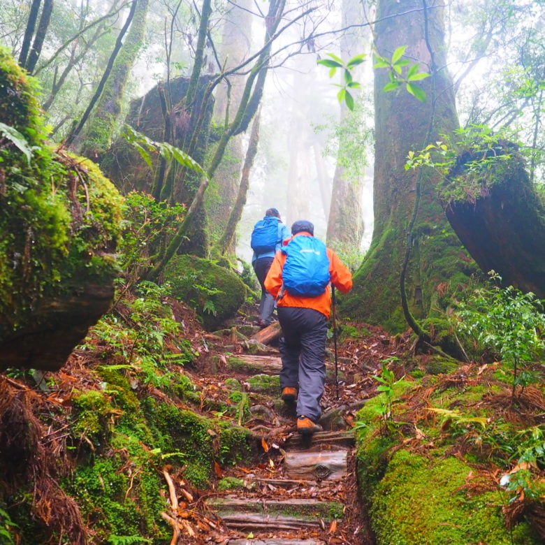 屋久杉・天文の森トレッキングツアーの画像