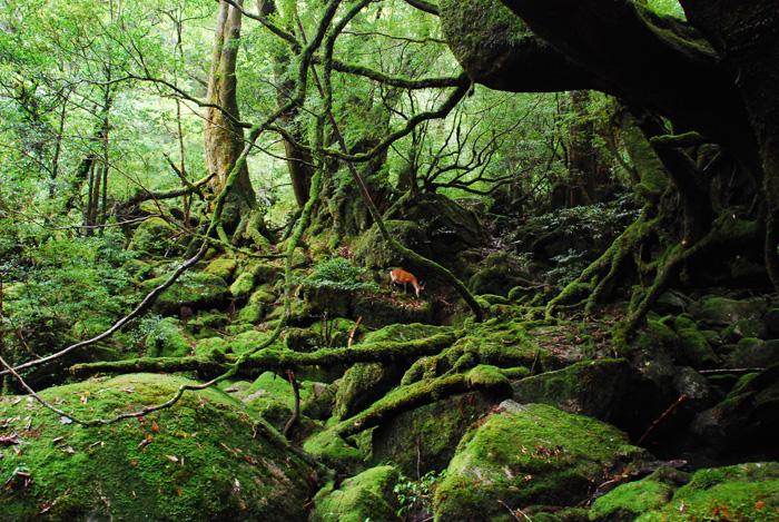 白谷雲水峡・太鼓岩トレッキングツアーの画像