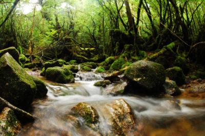 森と水のエコツアー