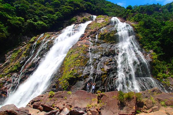 島周遊A・ガジュマルの森エコツアーの画像