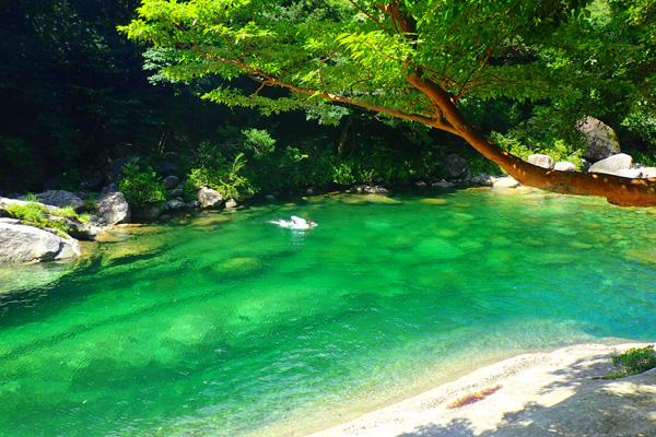 森と水のエコツアーの画像