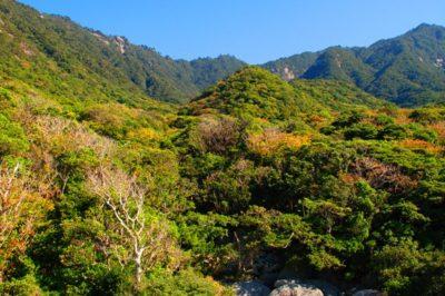 島周遊A・ガジュマルの森エコツアー