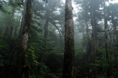 屋久杉・天文の森トレッキングツアー