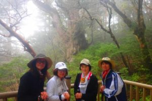 縄文杉ひとりじめキャンプツアー 7つの魅力