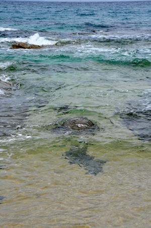 海に帰るアカウミガメ!