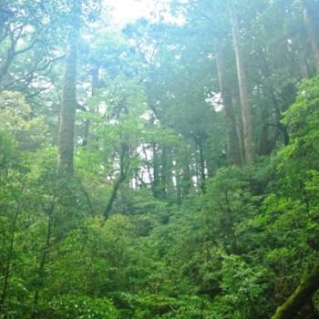 オオヤマレンゲを求めて!石塚山へ行ってきました。