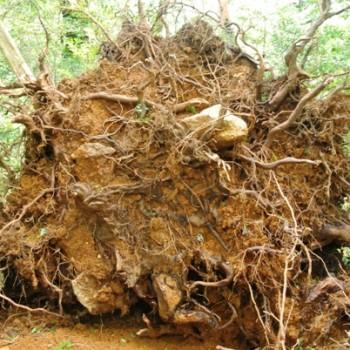 白谷雲水峡&ヤクスギランド最新情報(台風の影響について)