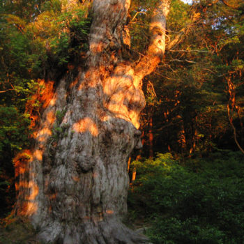縄文杉だけが屋久島ではない。