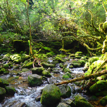 白谷雲水峡トレッキングでよく見かける苔たち