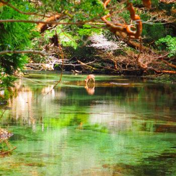 贅沢な森の時間を満喫! 淀川トレッキングツアー