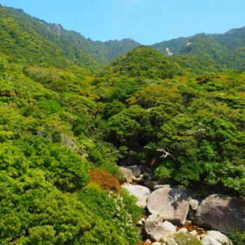 野生のヤクザルとヤクシカに逢える! 亜熱帯ジャングルの森をトレッキング