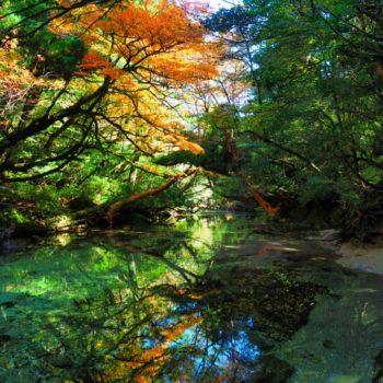 秋の屋久島を満喫! 淀川の森トレッキングツアー