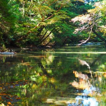 現地プロガイドが教える、屋久島旅行(観光)3つのプラン